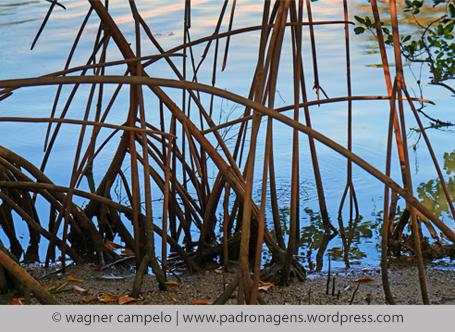mangue ©wagner campelo